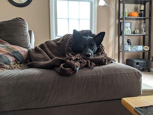 Snuggled Oliver
