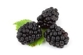 Organic Lip Balm-Mountain Berry