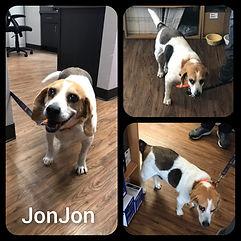 JonJon Collage.jpg
