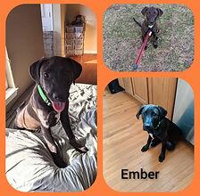 Ember Collage.jpg