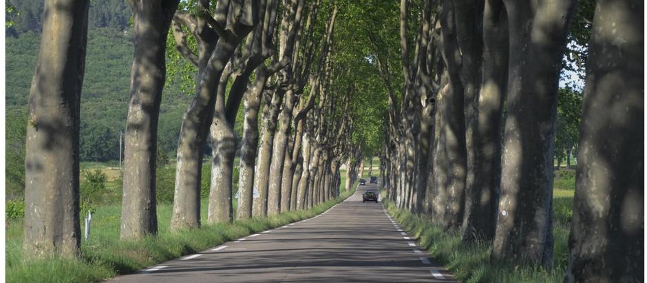 En catimini, le gouvernement facilite l'abattage des arbres d'alignement - de Reporterre.net
