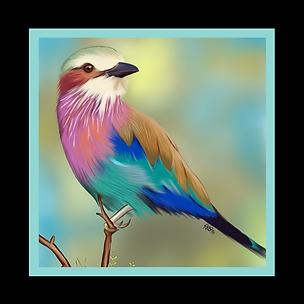 Thumb-Portfolio-BIRDS.png
