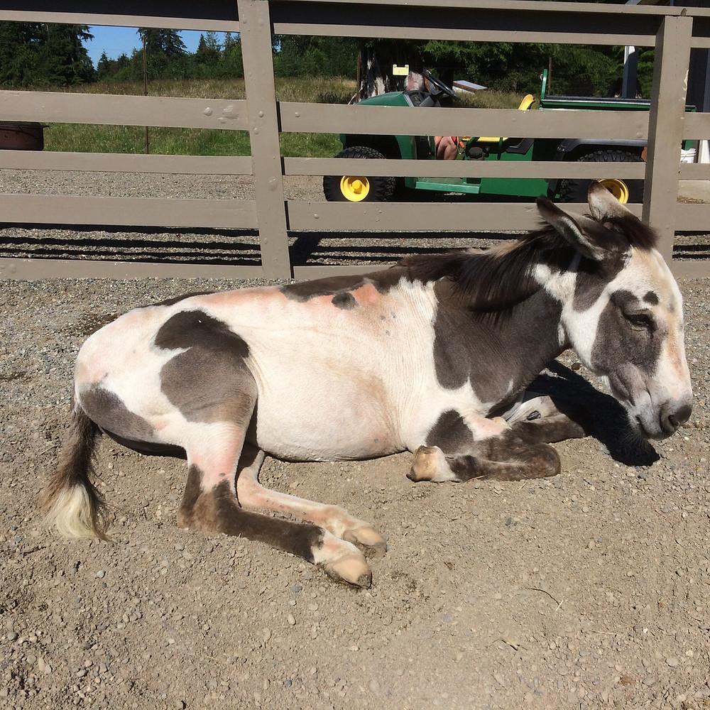 depressed donkey