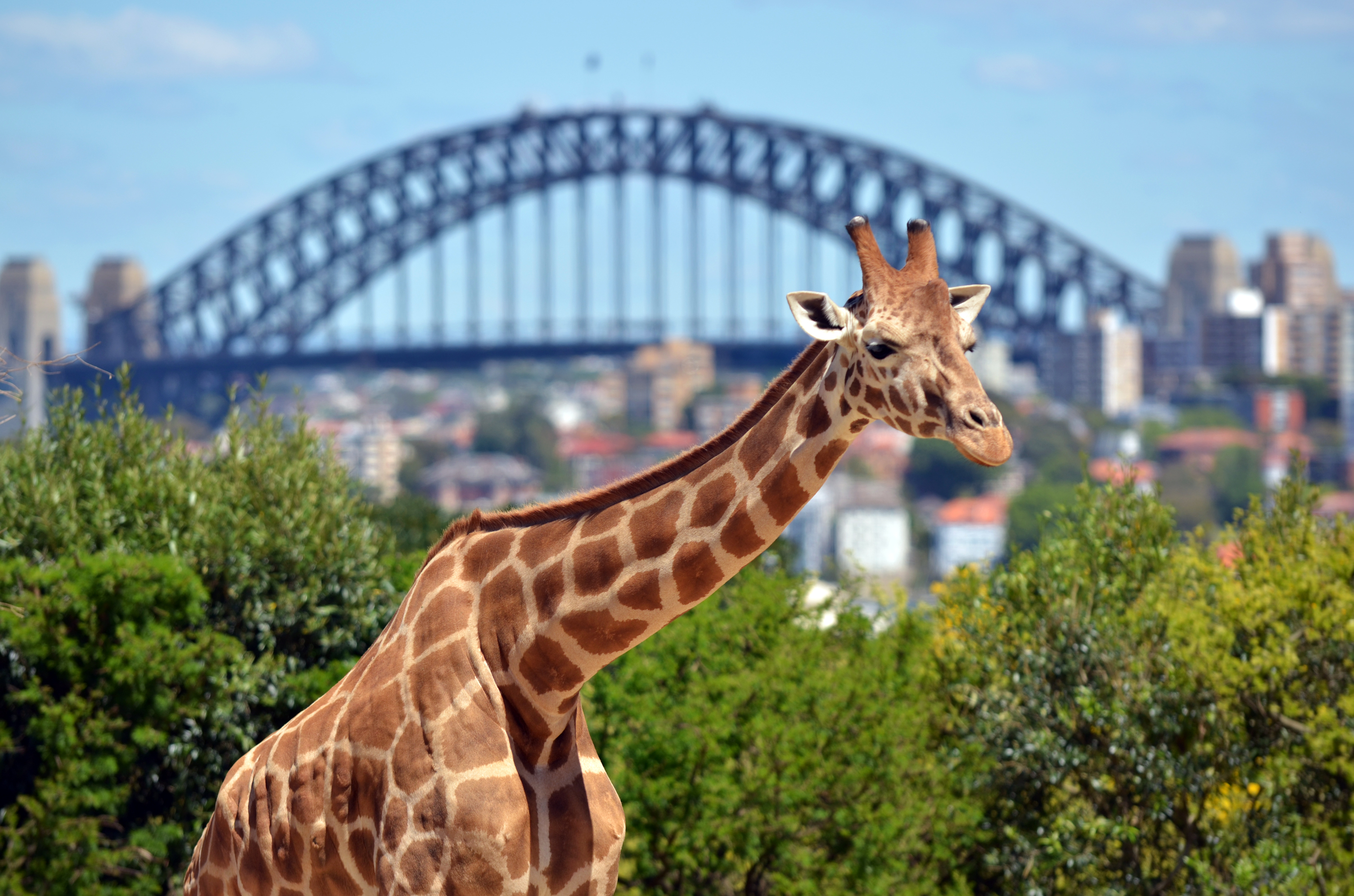 Taronga Zoo Sydney New South Wales Australia