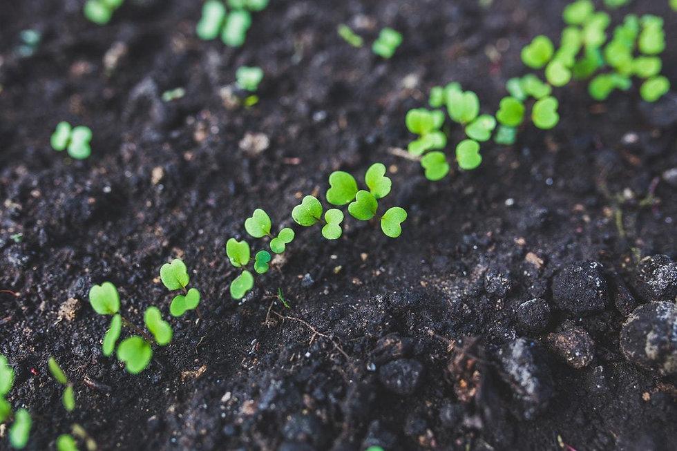 soil health 1.jpg