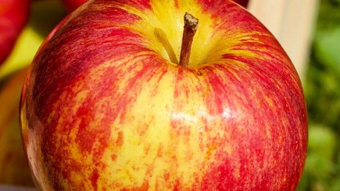 Gala apple, 500g
