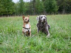 Hunde Pita und Phili