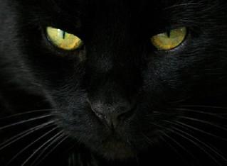Il Gatto Nero e quello che (forse) ancora non sai
