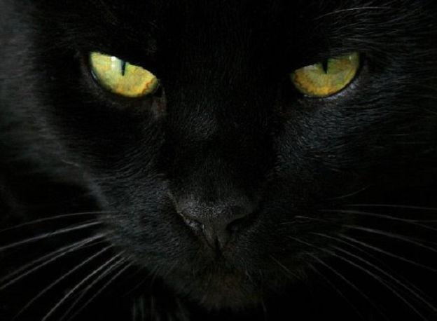 Nero nera nero micio