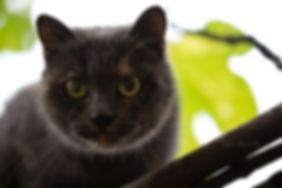 adozione gatti cuccioli magenta