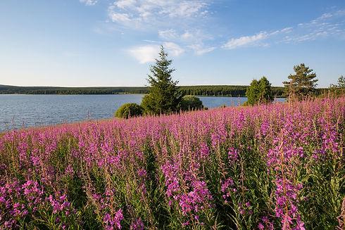 Lac de charpal en été