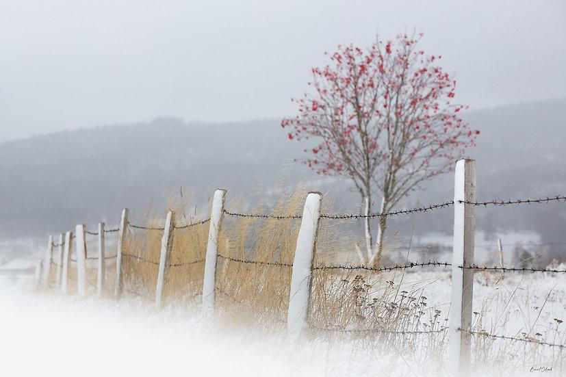 La clôture et le sorbier