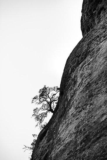 Le grimpeur