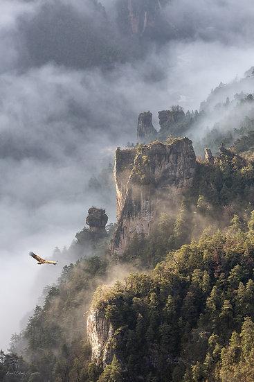 Sublime vautour