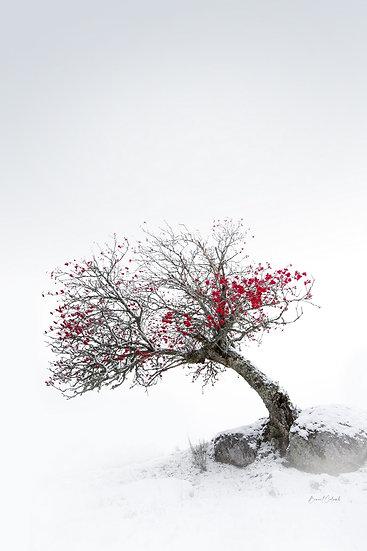 En rouge et blanc