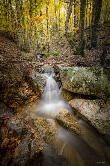 Ruisseau au Bougès