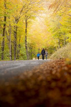 Promenade d'automne 06