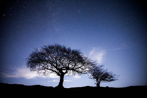 L'arbre aux étoiles