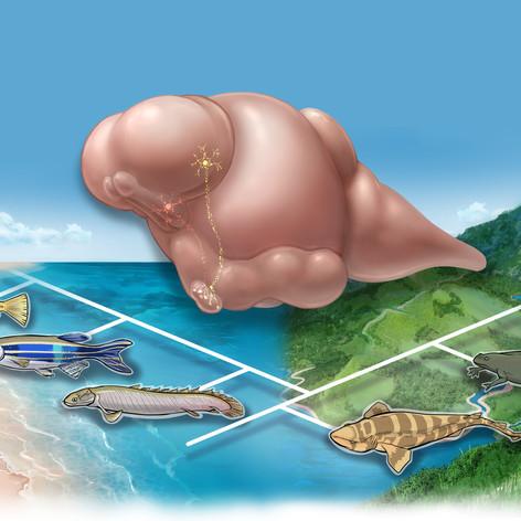 東京大学大気海洋研究所 ホームページイラスト