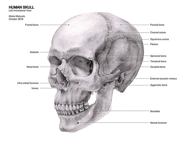 MSC 1001Y_Skull_E_Final.jpg