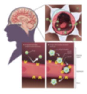Image1_BBB+Brain+Micelle_ver1_ENG.jpg