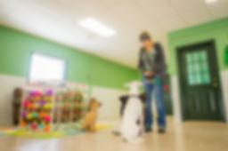 The Oaks Puppy Program 3.jpg