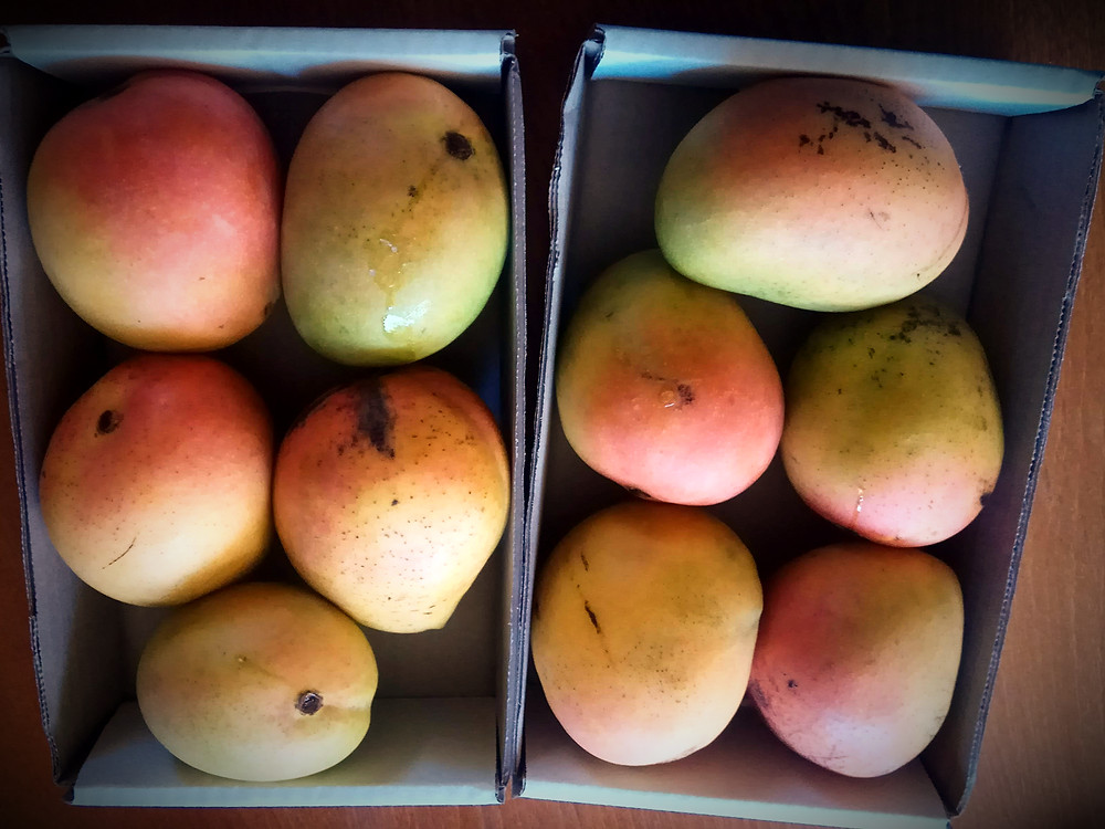 Mango, Post Goorooyarroo, Horse Park Drive Mangoes