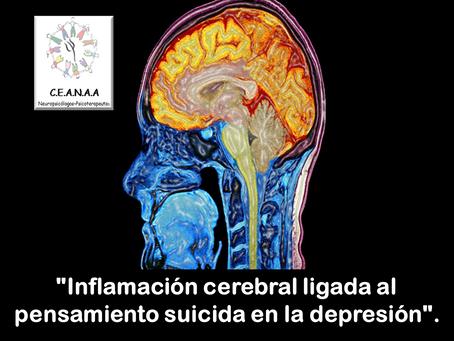 """""""Inflamación cerebral ligada al pensamiento suicida en la depresión""""."""