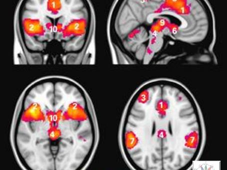 El Miedo desde Neurociencia