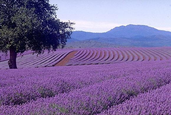 Organic Lavender Deodorant