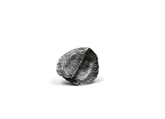 Jacaranda Pod