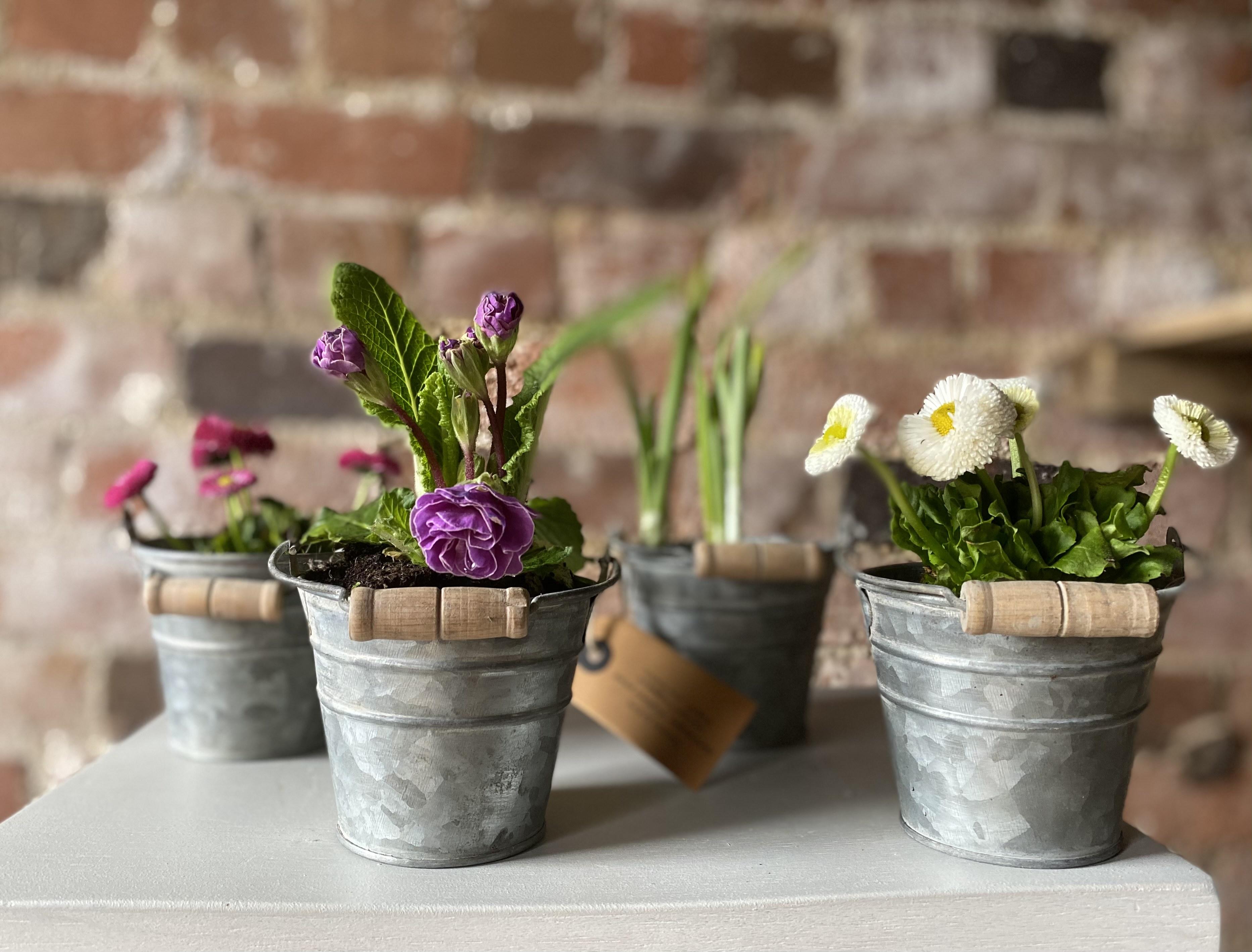 Mini planters in zinc pots
