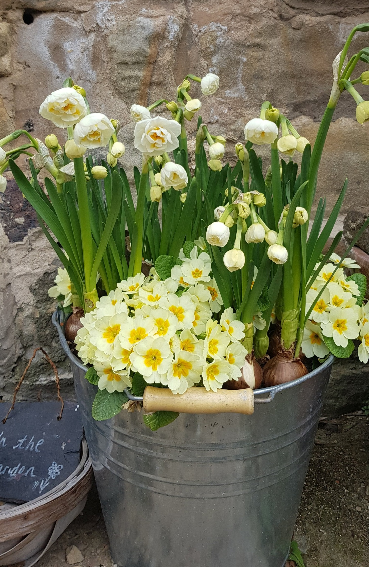Zinc bucket spring planter £55