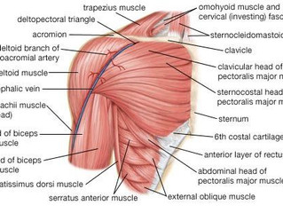 The Shoulder (doesn't have to be so) Complex!