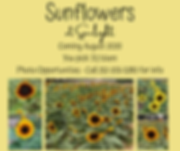 Sunflowers.png