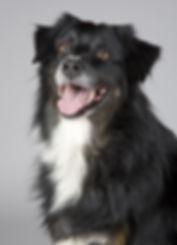 animal-pet-dog.jpg