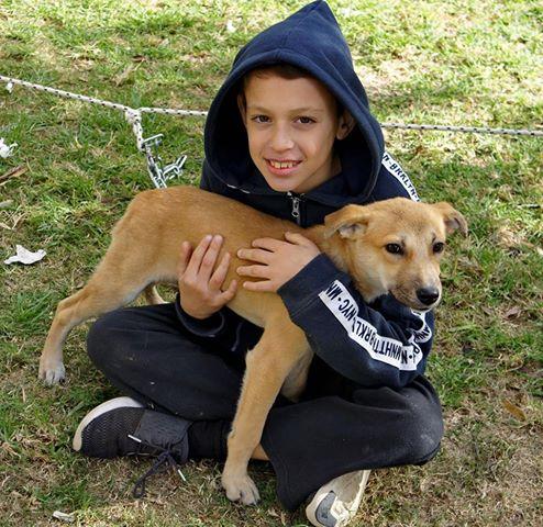 כלב לאימוץ - גור כלבים