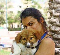 כלב לאימוץ - גור רועה אוסטרלי