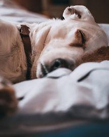 adorable-animal-animal-photography-79186