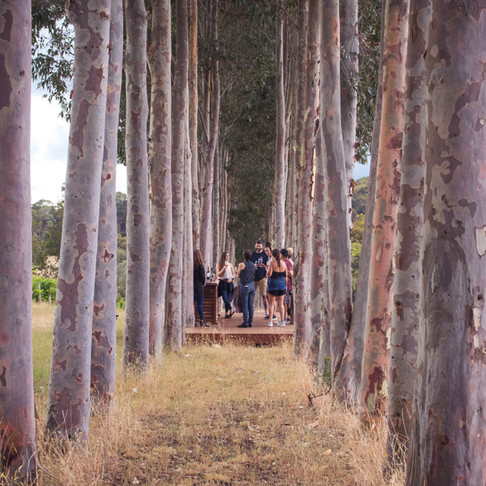 Our Top 5 Margaret River Wineries