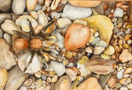 """Rock n T for Tarantula"" by Juan Leal"