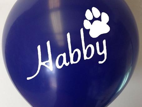 HAB-Antibullying chosen as charity of the month