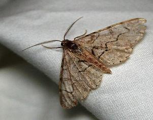 worn_moth.jpg