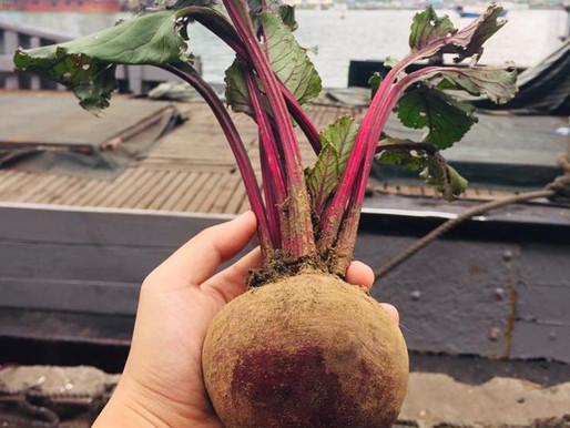 紅菜頭Beetroot