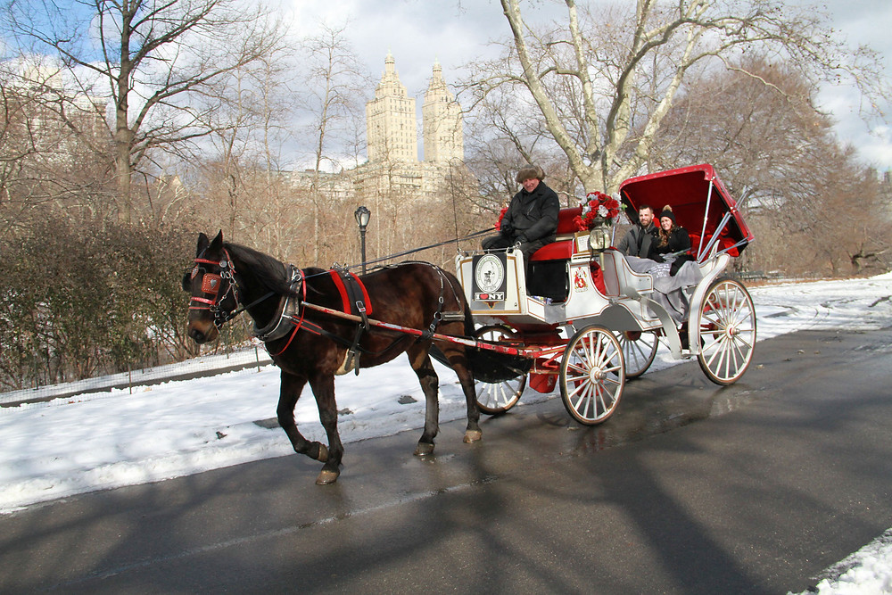 Central Park Carriage Ride on Winter Day!