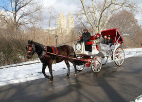 Carriage Ride in Central Park by Official NYC Horse Carriage Ride company!