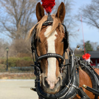 Dante - Sweetest Horse in NYC