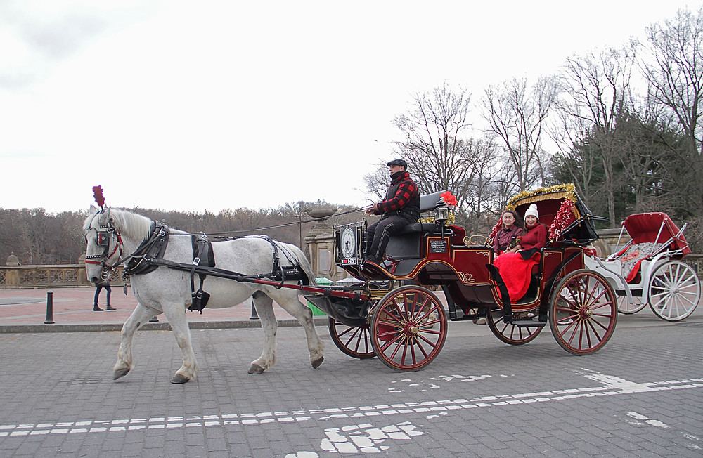 Central Park Horse Carriage Ride in New York City bringing romance and memories to locals or tourist for over hundreds of years! Central Park carriage rides date back to 1800's when chivalry was very much alive. All Walt Disney's love stories involved a princess on a magical horse drawn carriage . Before cars were invented , horse and carriage rides were the most popular attraction in NYC, which is also why we call it the Big Apple!  Central Park Carriage Rides has become one of the most traditional and romantic attractions in NYC.