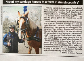 Central Park Carriage Horses Riding Out Coronavirus in Amish Country