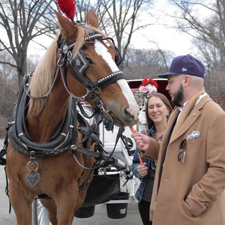 Central Park Horse Carriage Rides | NYC Horse Carriage Rides